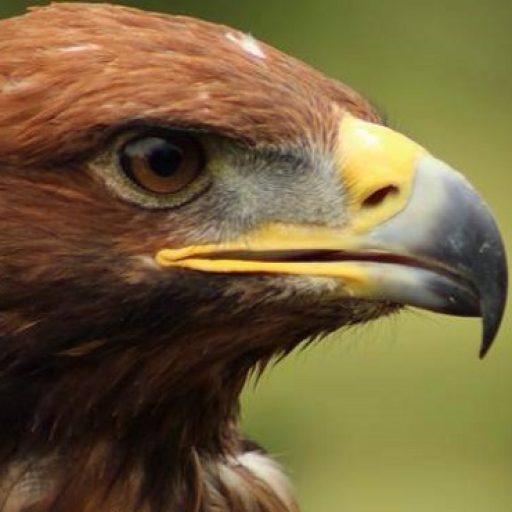 Bird of prey education