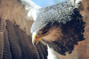 bird of prey and falconry courses