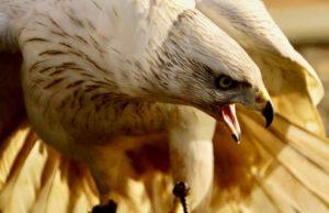 falconry course